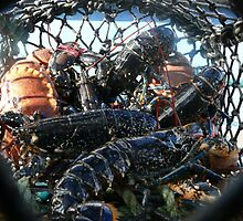 Fresh caught lobsters - Islay, Scotland by Pamela Baker