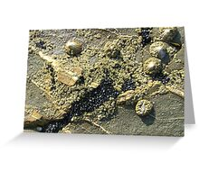 mussels, barnacles, limpets, oh my! (Seafield Beach) Greeting Card