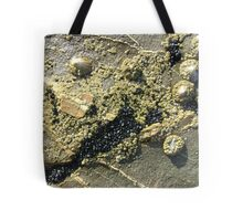 mussels, barnacles, limpets, oh my! (Seafield Beach) Tote Bag