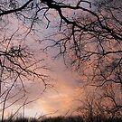 Sunset in the wood by Elena Skvortsova