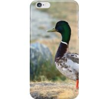 Male Mallard Duck iPhone Case/Skin