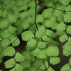Maidenhair fern by Anna Koetz