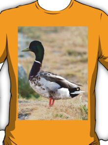 Male Mallard Duck T-Shirt