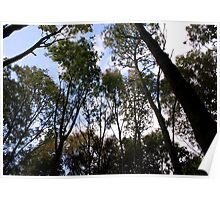Woodland Skyscape Poster
