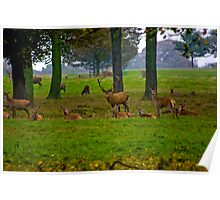 Woodland Scene - Red Deer Poster