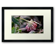 Little treasure in the cold Framed Print