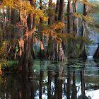 Swamp Sunset by David Edwards