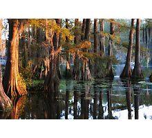 Swamp Sunset Photographic Print
