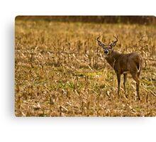 Whitetail Buck Canvas Print