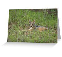 Lazy jackal cub Greeting Card