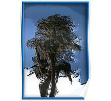 Florida Cypress Tree Poster
