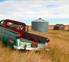 Grassy prairies by zumi