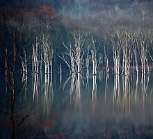 November Light by Mary Ann Reilly