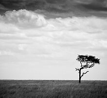 solitudine by dfm63