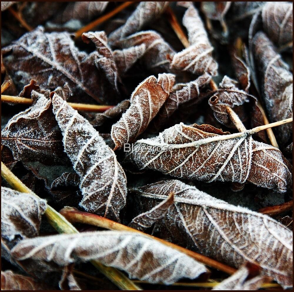 Frost by Bluesrose