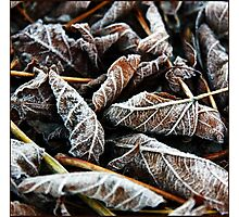 Frost Photographic Print