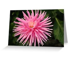 Pink Spiky Dahlia Greeting Card