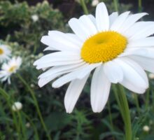 Daisies in a Vacant Lot Sticker