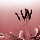 Flower power! by lokanin