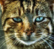 Cat by Kadir Murat Tosun