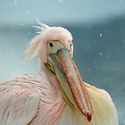 Snow pelican by mrshutterbug