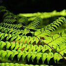 tree fern by dmaxwell