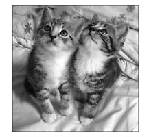 Kittens - By MoGeo Photographic by MoGeoPhoto