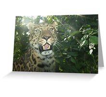 Leopard! Greeting Card