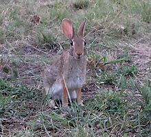 Easter Bunny in May,Texas by grayjenny