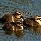 Ducklings by kwill