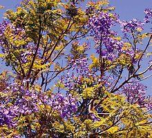 Jacaranda by georgieboy98