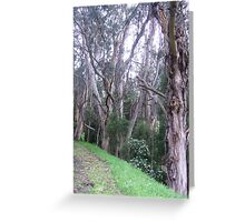 Gumtrees, Apollo Bay, Victoria Greeting Card