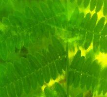 Plasma leaves serie n°1 by edend