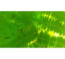Plasma leaves serie n°1 Photographic Print
