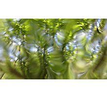 Plasma leaves serie n°6 Photographic Print