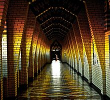 the tunnel of light by daniellehuard