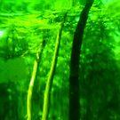 Green Wood Serie n°1 by edend
