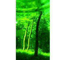 Green Wood Serie n°1 Photographic Print