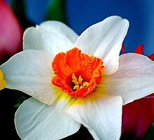 Daffodil by DM-Photo