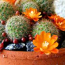 Beauteous Rebutia by LouJay
