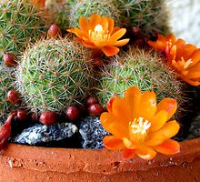 SUCCULENT! by LouJay