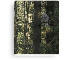 Possessing the pine Canvas Print