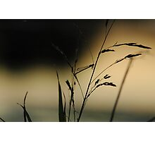 """Very Grassy"" (1/13) Photographic Print"