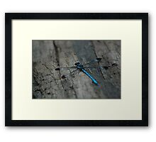 "(6/13) ""Flat Blue"" Framed Print"
