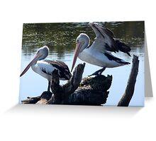 Wetland Pelicans Greeting Card