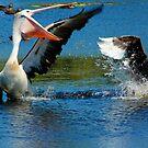 Battle in the Wetlands by byronbackyard