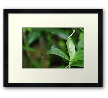 "(9/13) ""Shake That Tail"" Framed Print"