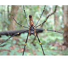 Orbweaver spiders at Territory Wildlife Park Photographic Print