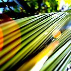 Tropical Leaves by kristy m