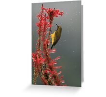 Yellow-bellied sunbird Greeting Card